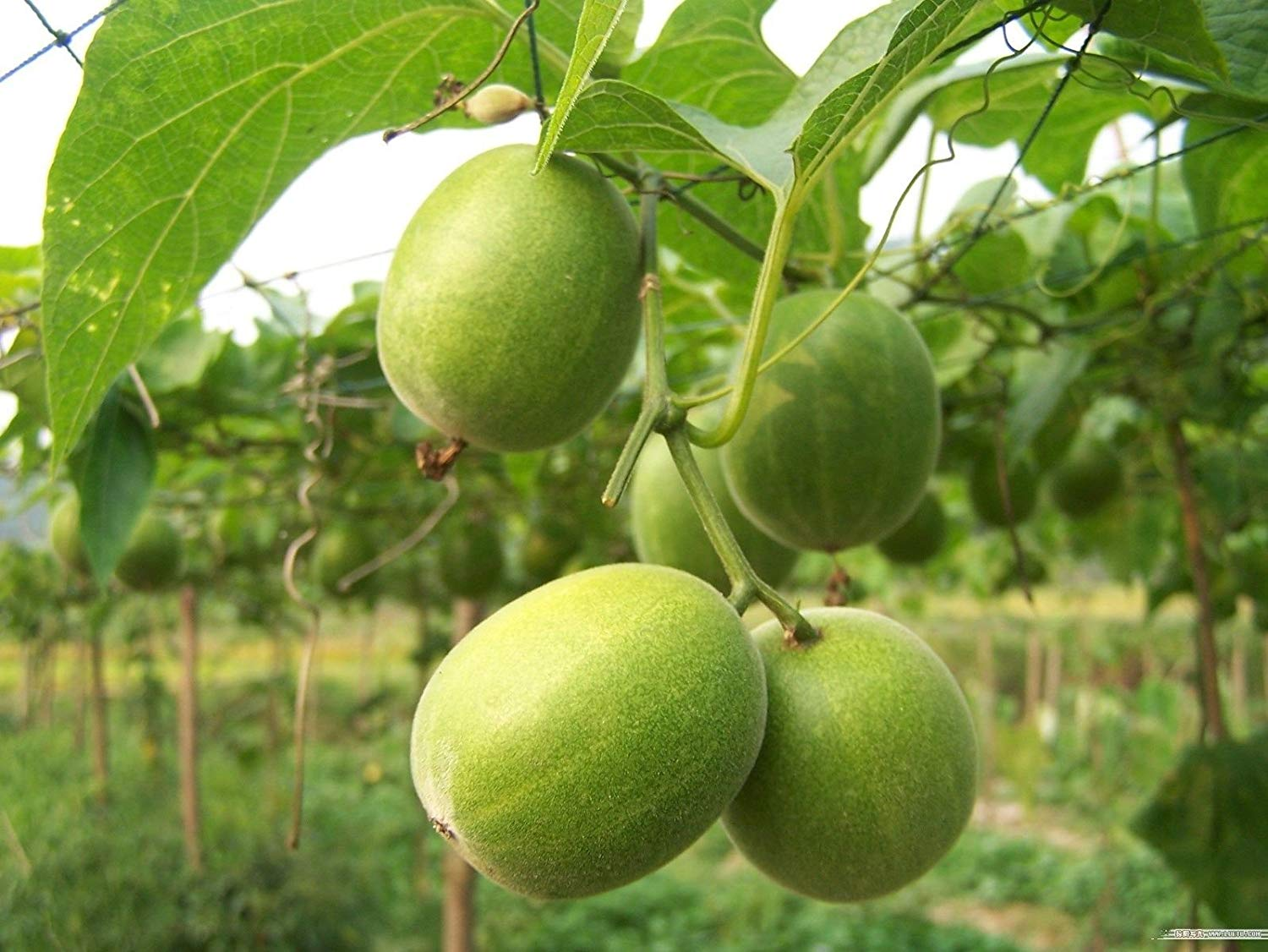 Benefits of a Monk Fruit Sweetener