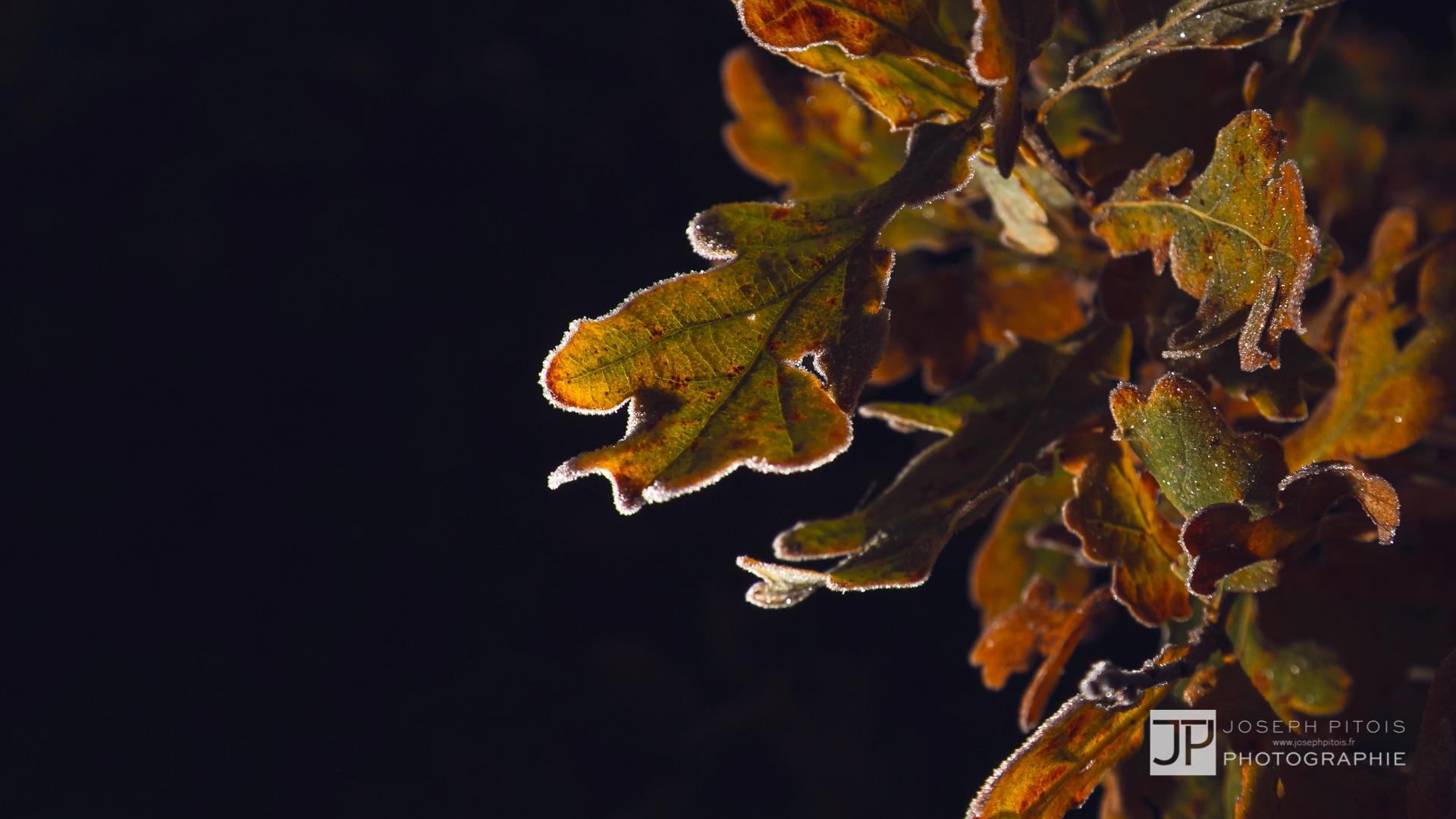 nature-proxy-automne-IMG_5288-2