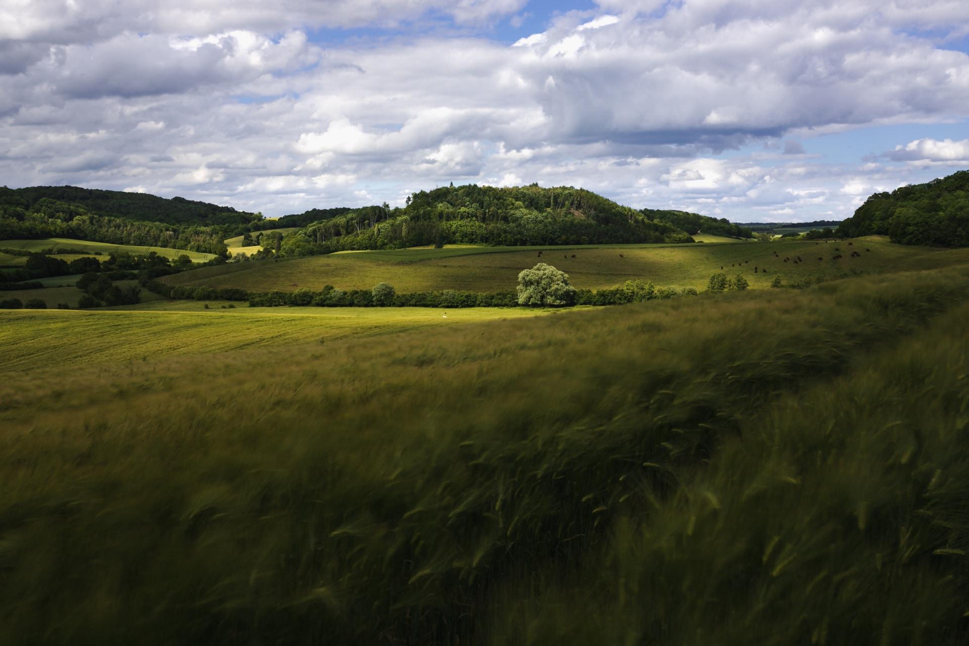 Paysage-prairie-Gemeindetheile- printemps2019-9693