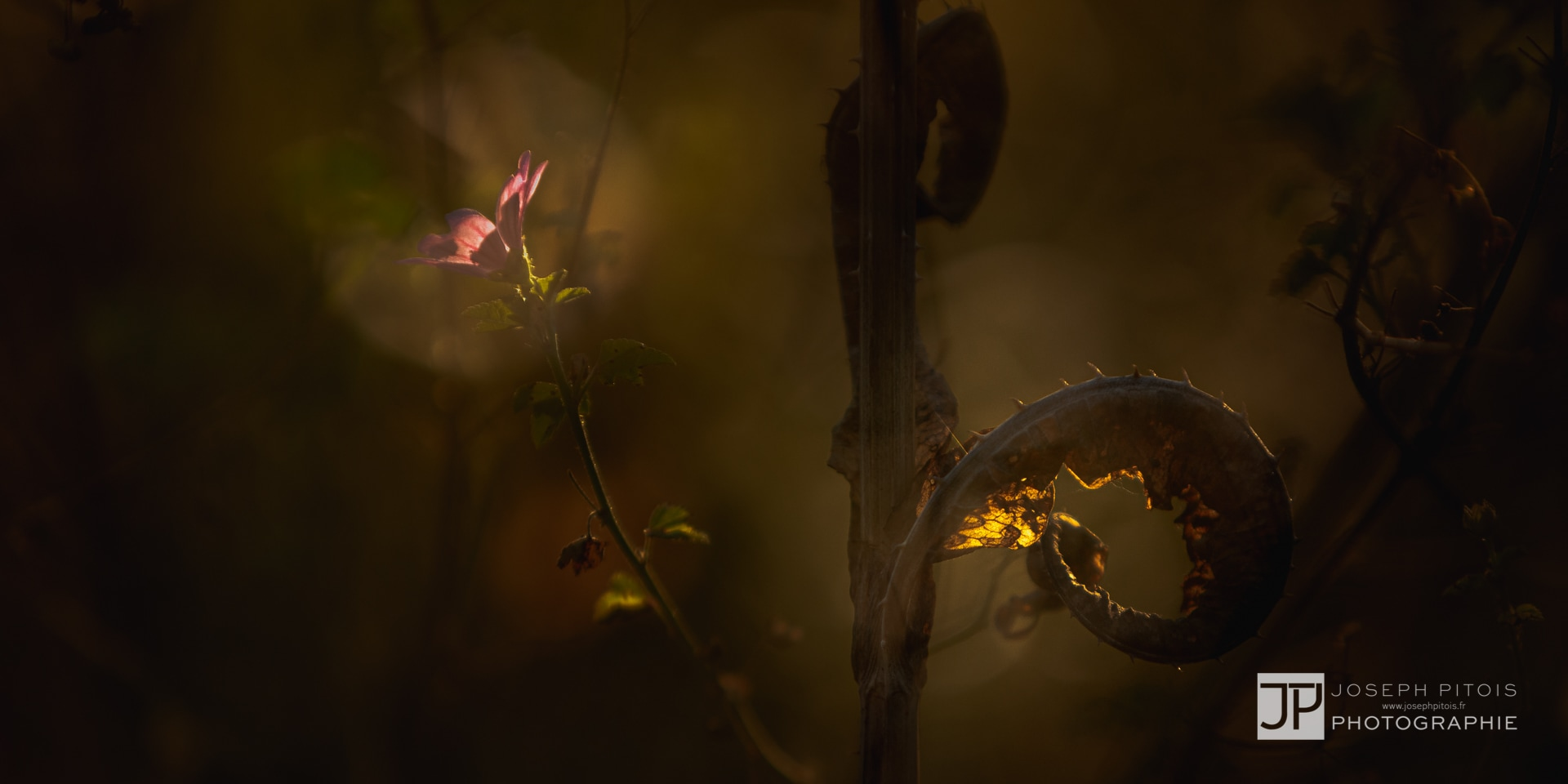 nature-doubleexpo-thionville-IMG_3715