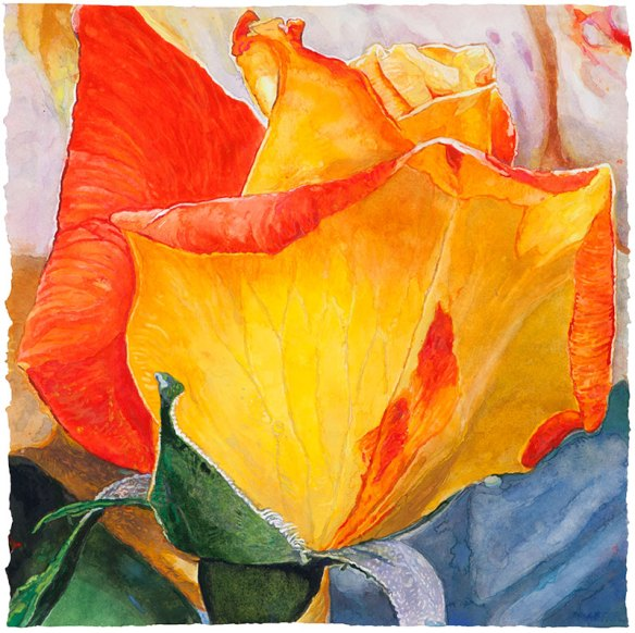 Lannis Rose watercolor on paper 47.6 x 48.3 cm - 18.75 x 19.00 in.  2017
