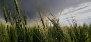 jw-home-storm