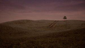 jw-wheat-cover