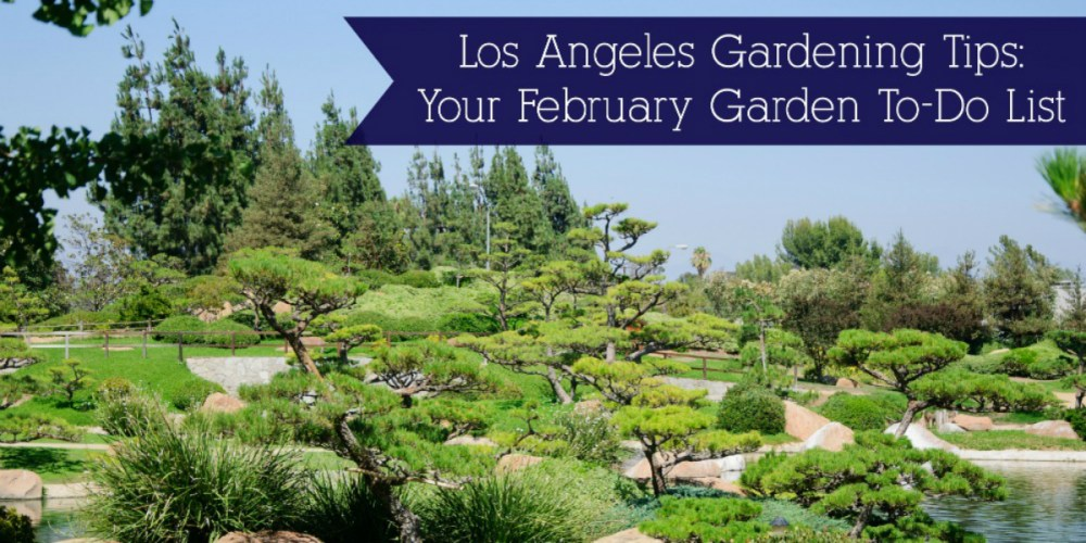 Los Angeles Gardening Tips: February Garden To-Do List