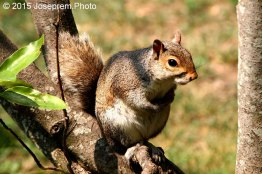 Mr.Squirrel from DC