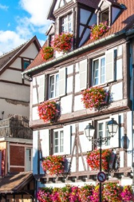 Alsace - Colmar window boxes.