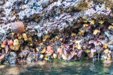 On Isabela, the base of the cliffs were covered with bright coral formations.