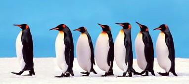 penguins-702729