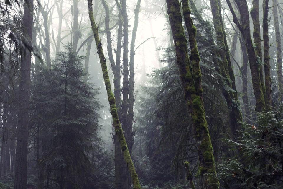 MyPDX_Trees_2-10