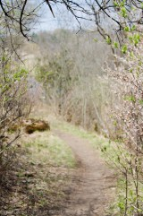 Pathway of Fantasy