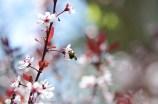 White Flowers on Tree 2