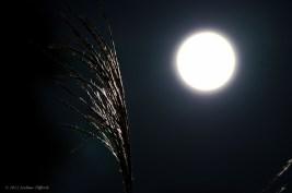 Moonlit Plant