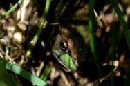 Frog in the Shadows