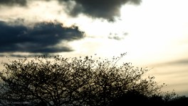 Tree Silhouetted on a Dark Day