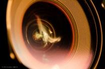 Fire Through the Lens 2