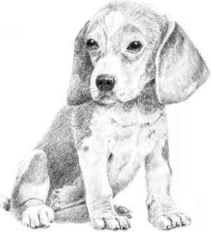 dog drawing dogs sketch pencil easy drawings fairies sketches point pointer arts paintingvalley nava joshua