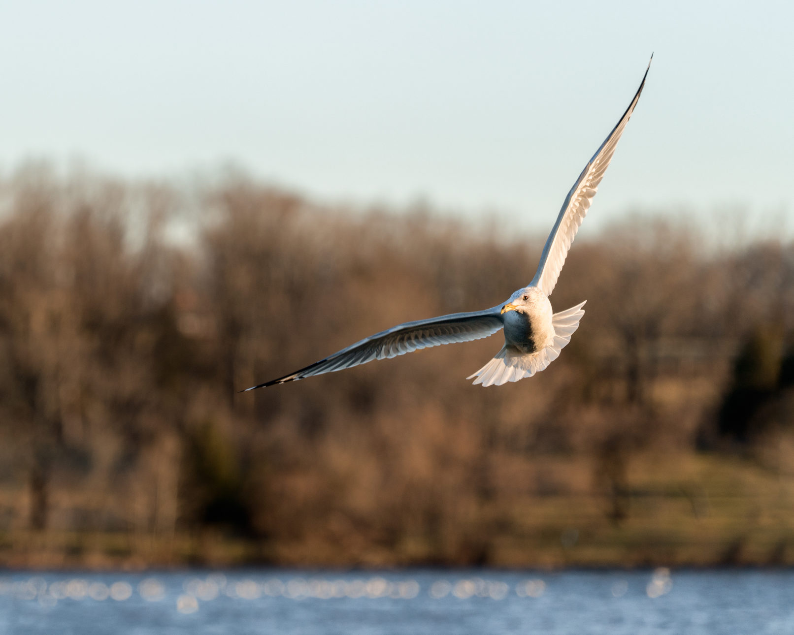 bird in flight by
