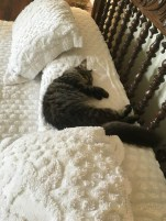 The cats enjoy free reign of the house