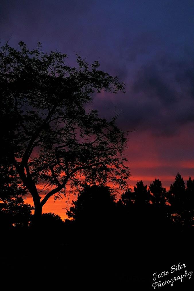The Surprise Sunset