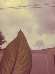 Sob o olhar da folha.