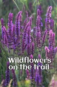 Wildflowers on the trail to Rauher Kulm in Bavaria. #wildflowers #germany #hiking