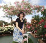 姫路ばら園、開園中です