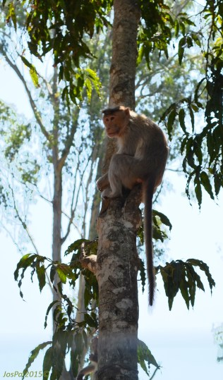 DSC_0195-RajivGandhi National Park