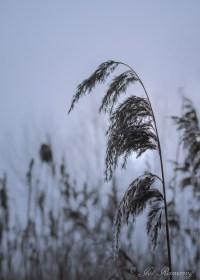 Winter-23