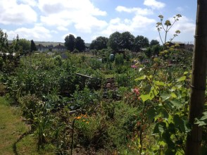 Our family allotment in summer