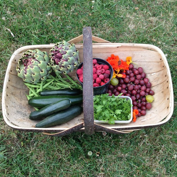 Trug of goodness from our allotment