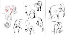 Zoo_Elefante