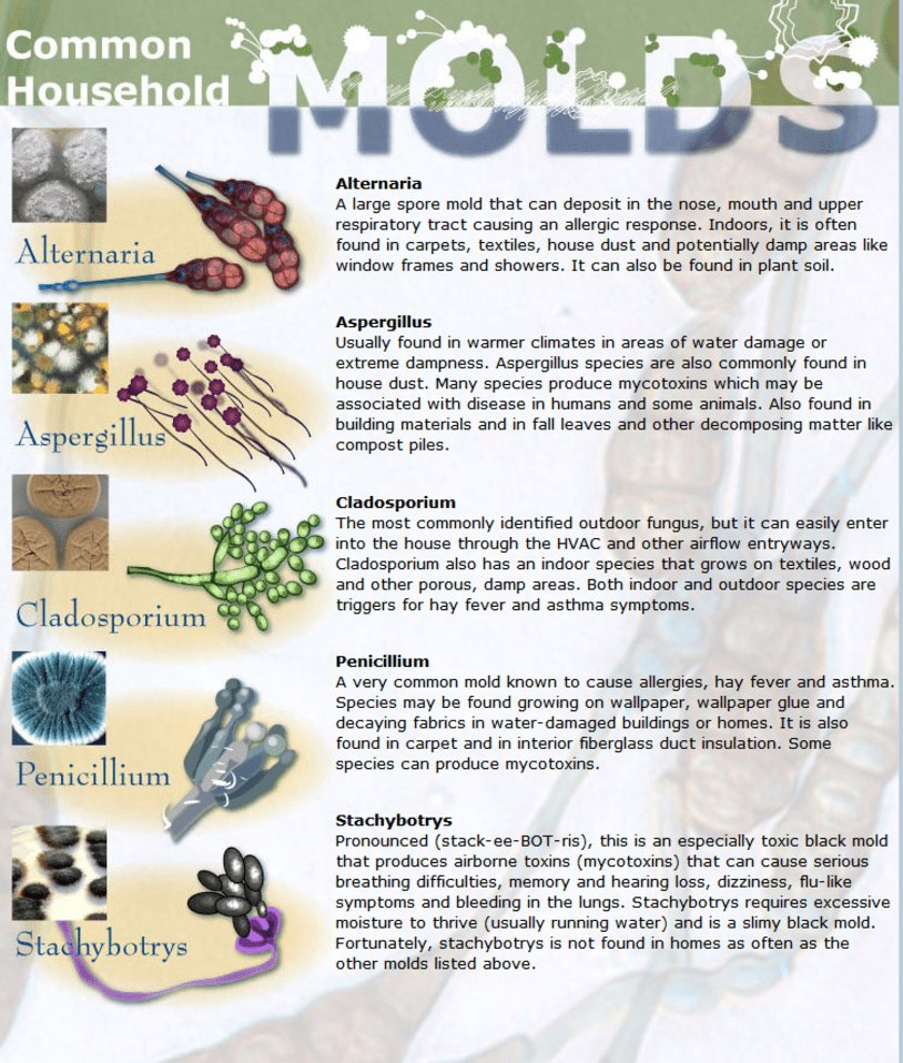 Best Mold In Your Bedroom Symptoms Risk Factors And Removal With Pictures