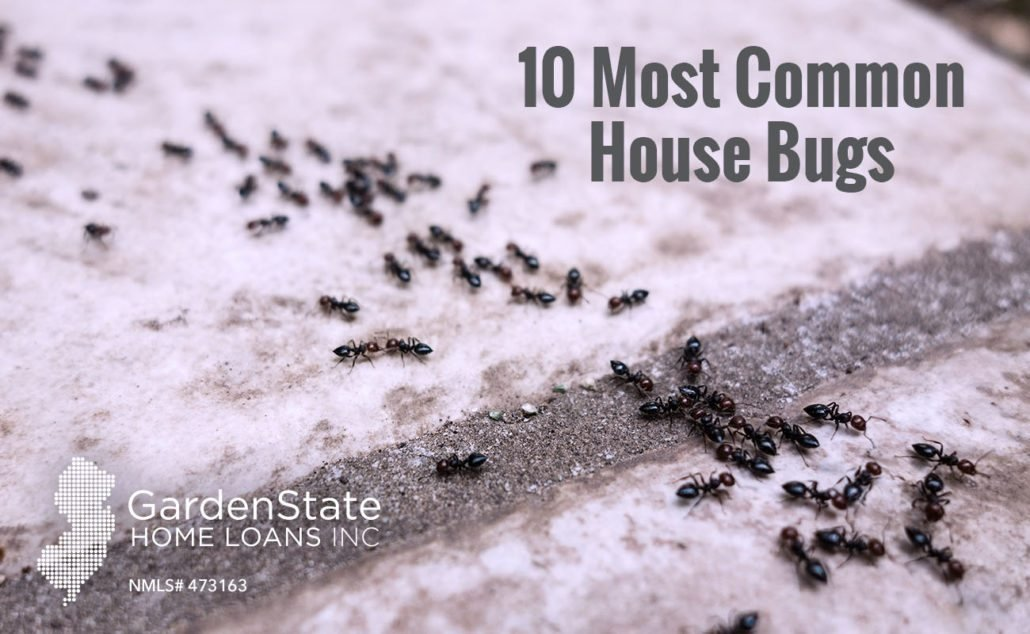 Best Common House Bugs The Top 10 Garden State Home Loans With Pictures