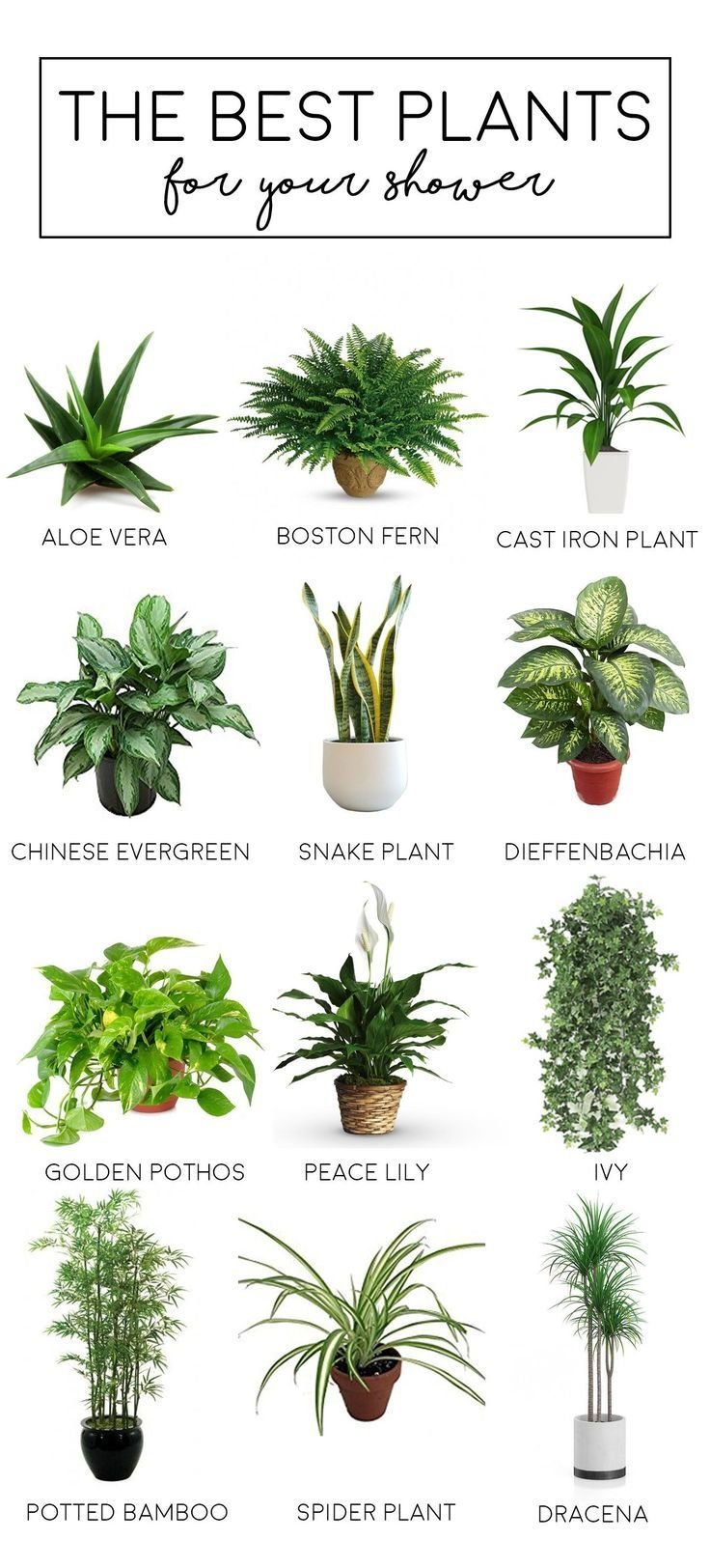 Best 25 Bedroom Plants Ideas On Pinterest Plants In With Pictures