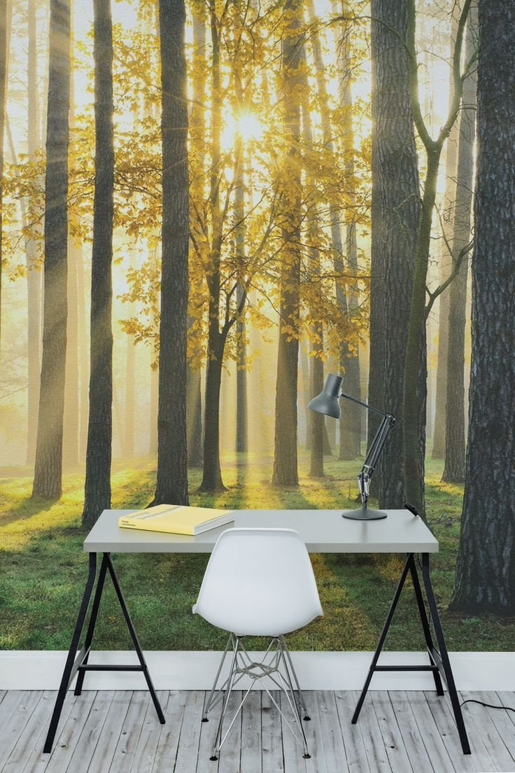 Best 25 Forest Wallpaper Ideas On Pinterest Bedroom With Pictures