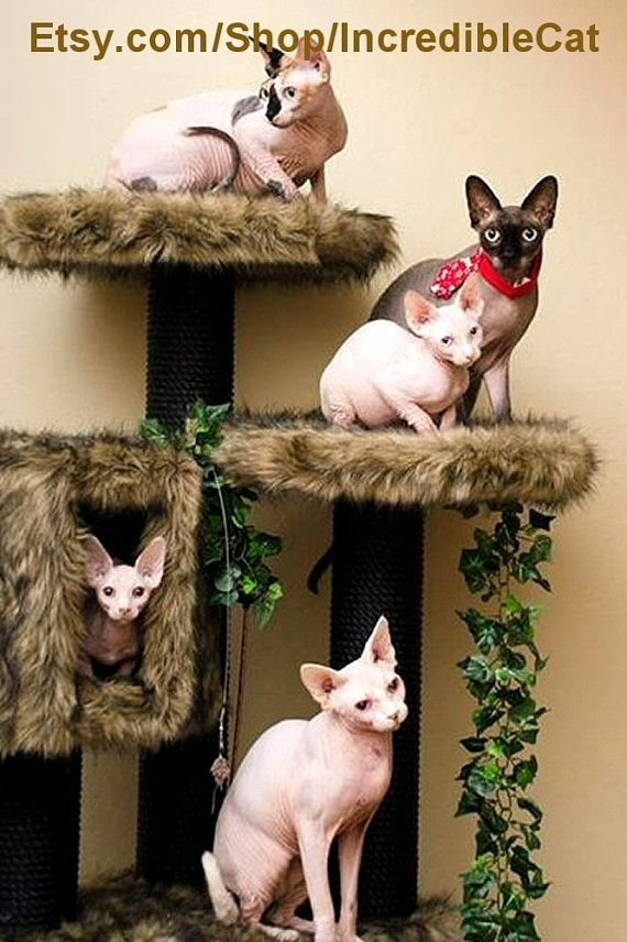 Best Luxury Cat Furniture Sale 5 Trees Designer Cat Beds With Pictures