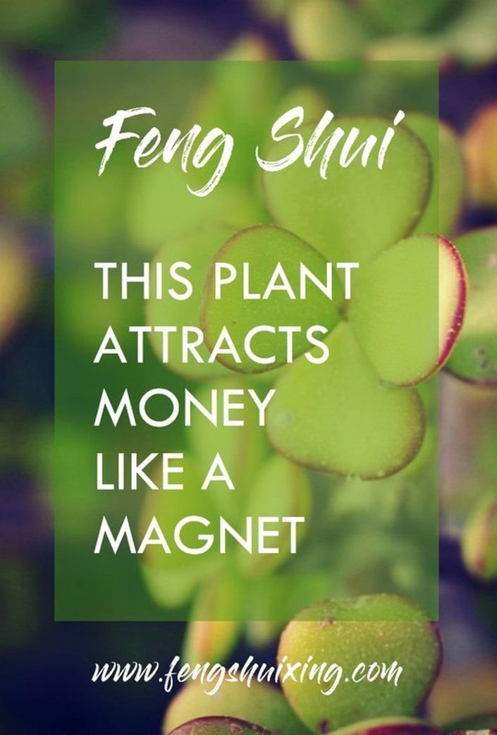 Best Feng Shui Wealth Money Plant Feng Shui Wealth In 2019 With Pictures