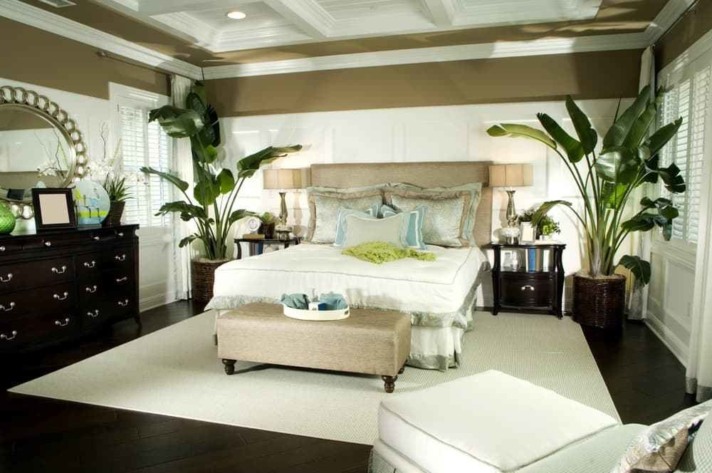 Best Why Feng Shui Doesn't Like Plants In Bedroom – Backed By With Pictures