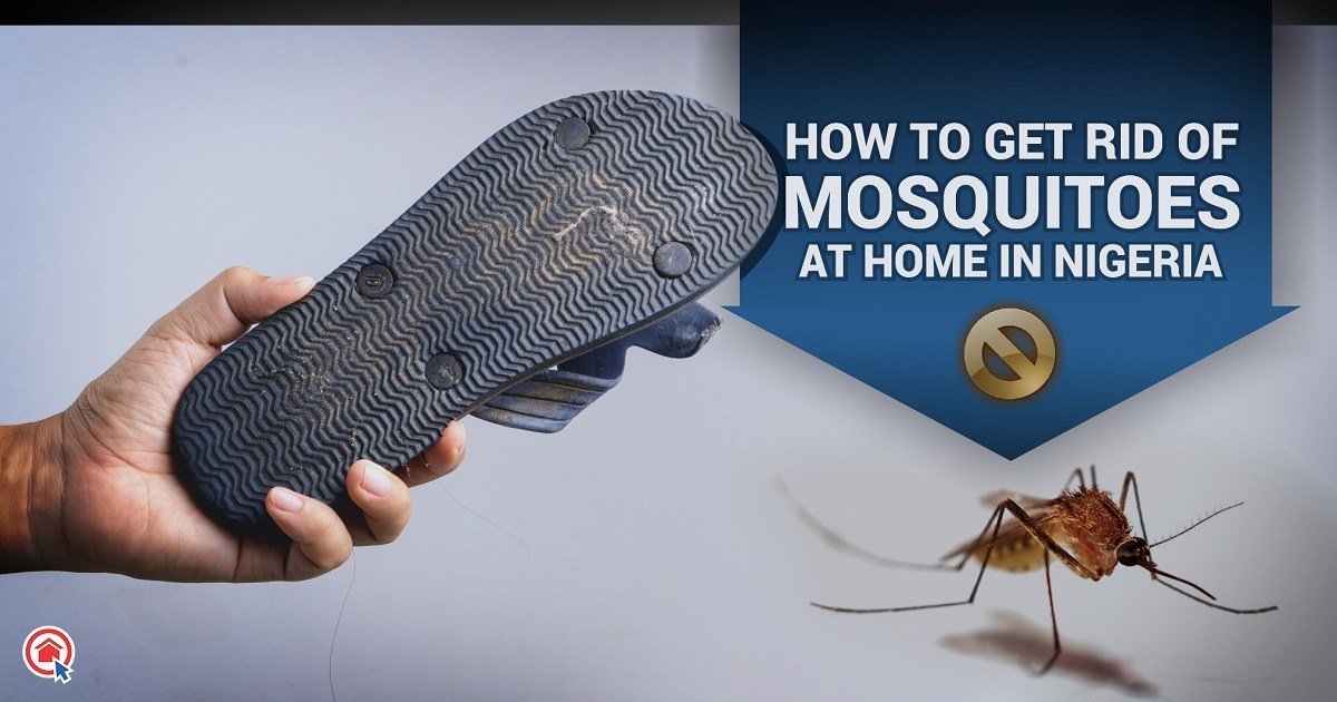 Best How To Get Rid Of Mosquitoes At Home In Nigeria Private With Pictures