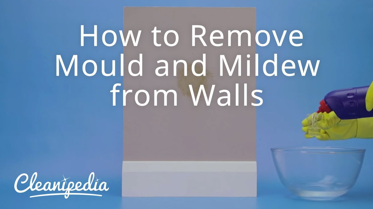 Best How To Stop Mold In Bedroom Www Indiepedia Org With Pictures