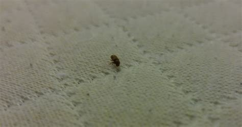 Best Rural Area Austin Tx Small Beetle Like Bug In Bedroom With Pictures