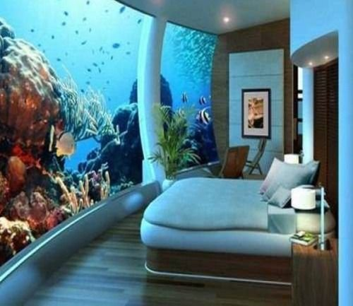 Best 1000 Images About Aquariums On Pinterest Shark Tank Islands And Fish With Pictures