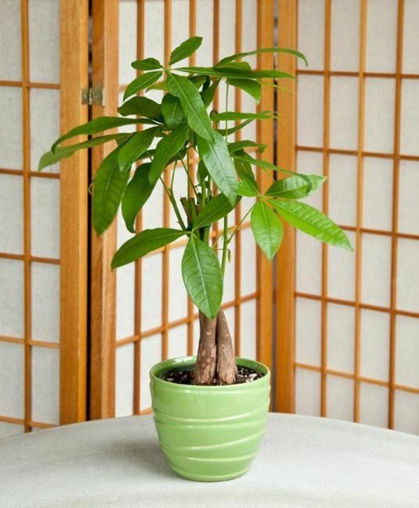 Best Feng Shui Plant For Harmony And Positive Energy In The With Pictures