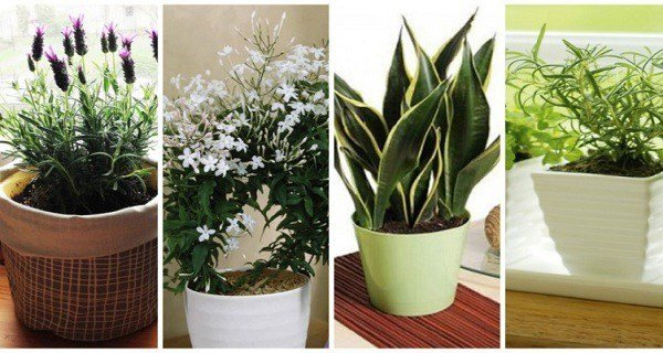 Best 10 Plants You Should Have In Your Bedroom For A Better With Pictures