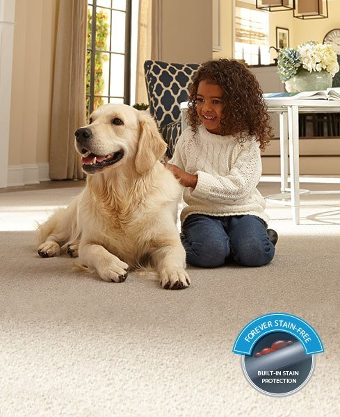 Best Home Decor Have Pets Want A Smart Carpet Solution With Pictures