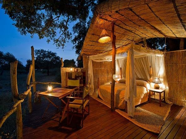 Best Flatdogs Jackalberry Tree House Zambia Go2Africa Com With Pictures