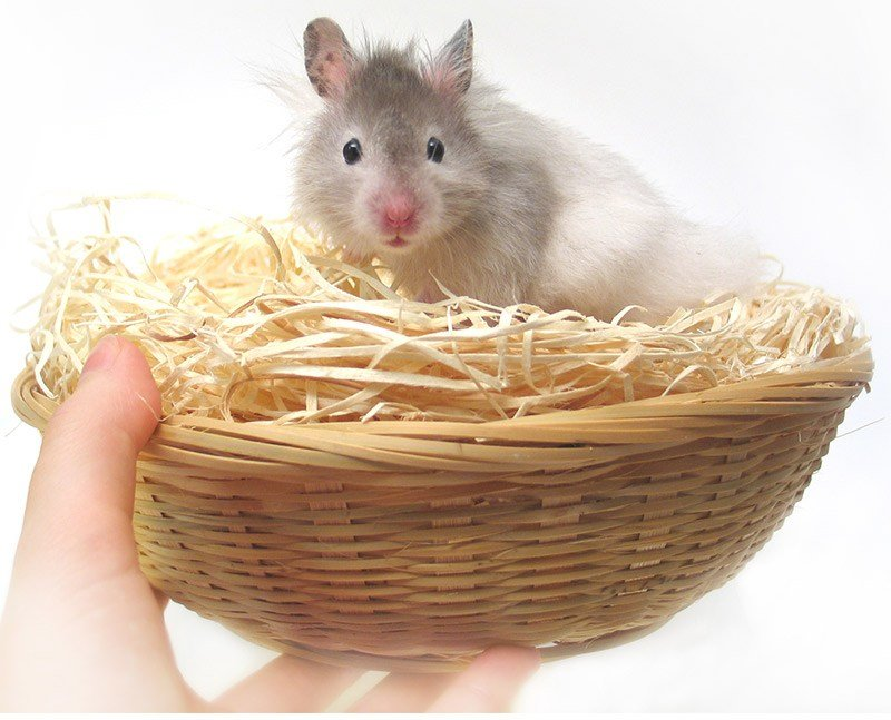 Best Hamster Bedding For Dwarf Or Syrian Hamsters With Pictures