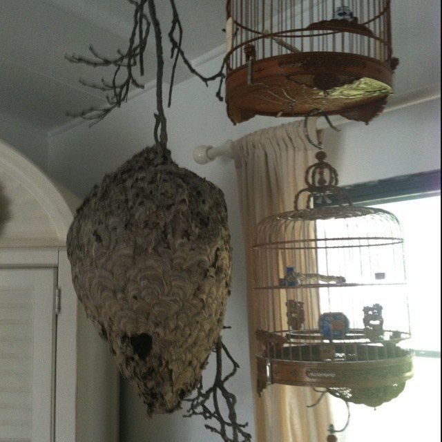 Best Wasp Nest In Bedroom With Pictures