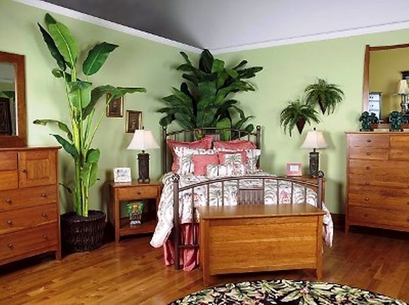 Best Indoor Gardening Plants For Bedroom With Pictures