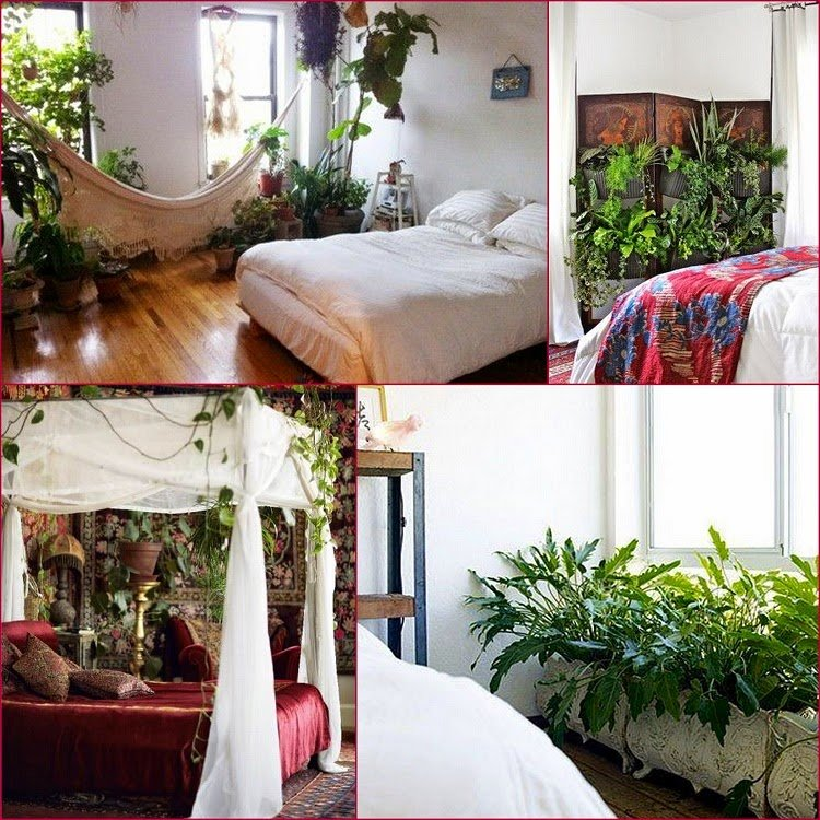 Best Gypsy Yaya Plants In The Bedroom With Pictures